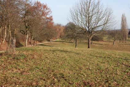 kurz vor Wettersbach auf dem Grünwettersbacher Weg (G. Franke)