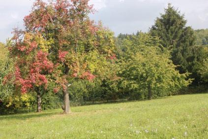 beginnende Laubfärbung - der Herbst lässt grüßen (G. Franke, 20.09.15)