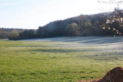 Beginn der Vogelstimmenwanderung um 07:00 Uhr - die Temperatur liegt knapp über dem Gefrierpunkt - noch liegt teilweise Reif auf den Wiesen