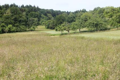 in Nähe Dietenhausen - vielgestaltige Landschaft mit Wiesen, Streuobstwiesen, Feldern und Wald