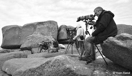 GEOCA, Groupe d'Etudes Ornithologiques des Côtes-d'Armor, ornithologie, ornithologues, observateurs du GEOCA, adhérents du GEOCA, observation oiseaux Côtes-d'Armor, Yoan Raoul, avifaune Côtes-d'Armor