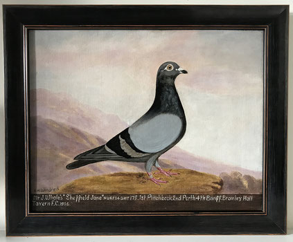 E H Windred oil portrait of a racing pigeon