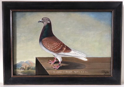 J T Ryder oil portrait of a racing pigeon