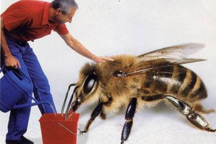 Arbeiten am Bienenstand