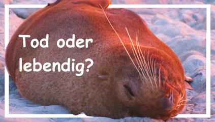 freilebende-tiere-neuseeland-reisetipps-weltforscher