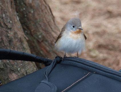 ●バッグの上にのった小鳥