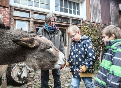Bettina Mittendorf schaut zu, wie zwei Jungen Esel Niklaus füttern. Die Einrichtung will einen weiteren Esel anschaffen. (Christian Kosak)