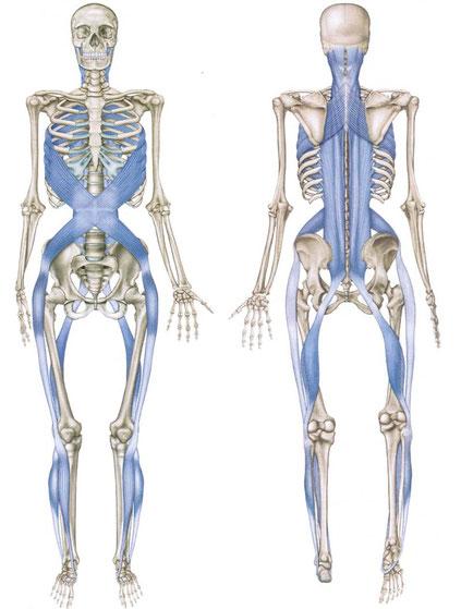 Osteopath & osteopatische Behandlung in München
