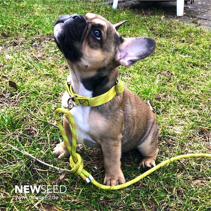 halsband leine hunde kletterseil tau newseed