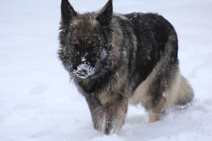 Arizona de la Légende du Loup Noir
