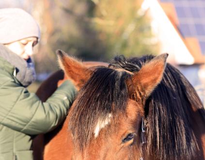 Traumatherapie am Pferd