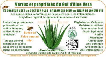 AloeVeraSante   l'Aloe Vera en usage interne : anti-inflammatoire, antiseptique, hémostatique, antalgique, apaisant, immunisant, antibiotique, antiallergique etc