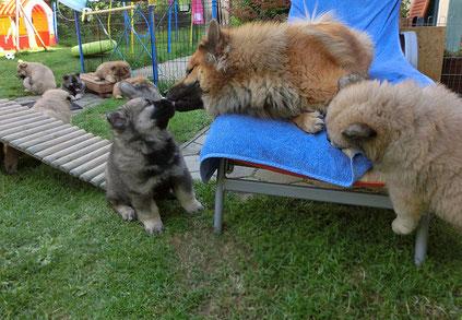 Mama Bia spielt mit ihren Kindern - aber lieber oben, auf der sicheren Liege ;-)))