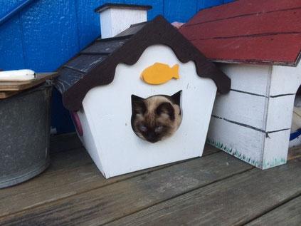 猫ハウス試作品