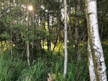 Waldbaden ist gesund und entspannend