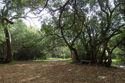 プラットボスの森の中、静かな時間を過ごす