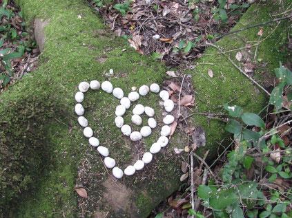 プラットボスの森の中で見つけたハート