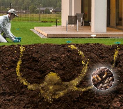 ©Sentri Tech, solution contre la lutte anti-termites