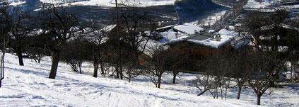 le verger situé au dessus du village de Montrigon (1600)