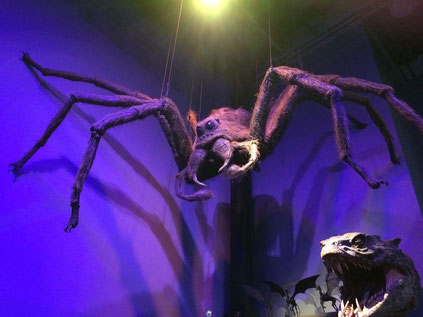 Harry Potter Studio Tour - Aragog