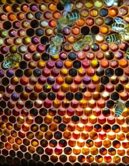 Bienenbrot vom Allgäu und Bodensee