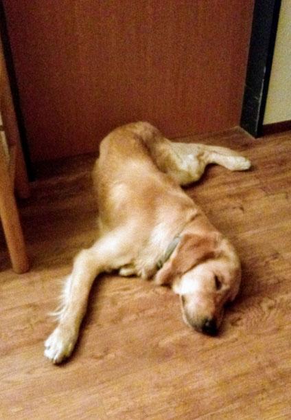 """Übrigens: Yoga kann er auch!  Hier zeigt er die Figur """"gezwirbelter Hund""""."""