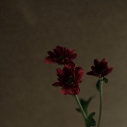 花の色、姿、その力
