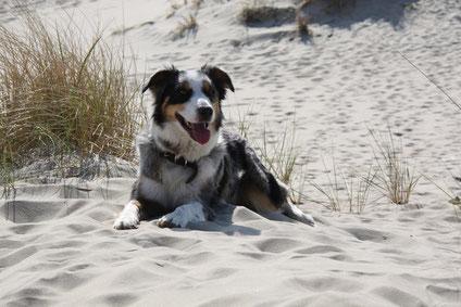 Passepartout Norderney Ferienwohnung Vermietservice Hund Urlaub Ferien Strand Nordsee Ostfriesland
