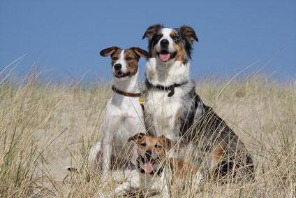 Hunde Passepartout