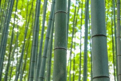 竹は節目が多ければ多いほど根が太いと言われています