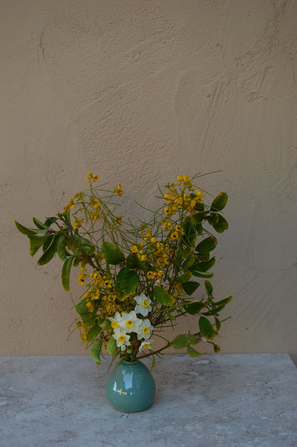 in a vase on monday, iavom, monday vase, small sunny garden, desert garden, amy myers, photography, narcissus, senna, nemophila, tazetta, lemon, stoneware, glaze, pottery