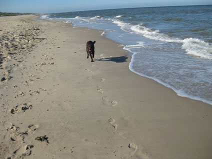Toni rennt am Strand