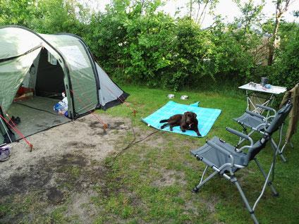 Toni liegt neben dem Zelt auf einer Decke.
