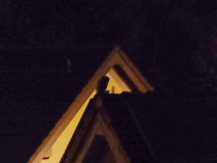 Käuzchen sitzt auf Dachgiebel.