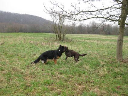 Toni und Frieda toben sich auf der Wiese aus.