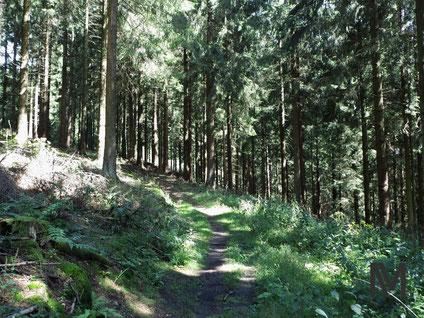 Idyllischer Märchenwald.