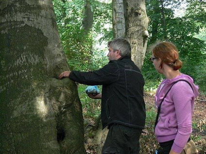 Normen Mrozinski füllt Futter in ein Loch im Baumstamm