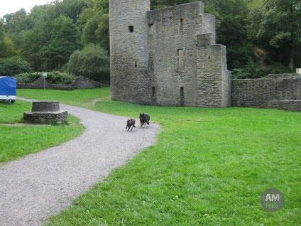 Frieda und Toni rennen über die Wiese vor Ruine Hardenstein.
