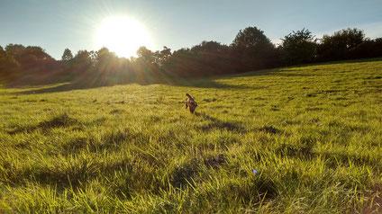 Strahlender Sonnenschein am Nachmittag.