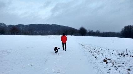 Schnee und Platz zum Rennen: Hund ist happy.