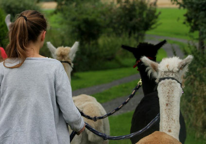 Ein Spaziergang mit Alpakas und Lamas macht viel Spaß und festigt soziale Kontakte!