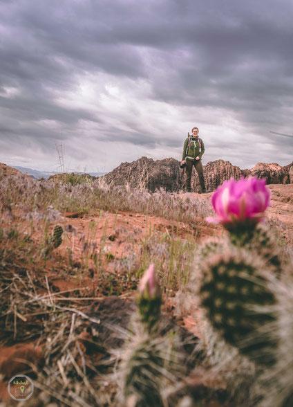 St. George Utah Snow Canyon State Park Sandstein unentdeckt wåçandern trail hikelust abenteuer nationalpark natur