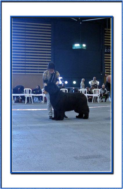 LYON IB 23/04/17 - INGRES 3ans 1/2 Classe CHAMPION - 3 ème EX - Juge: Mme Bardet