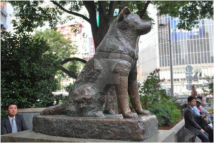 Estàtua de bronze erigida a l'estació de Shibuya en honor a Hachiko
