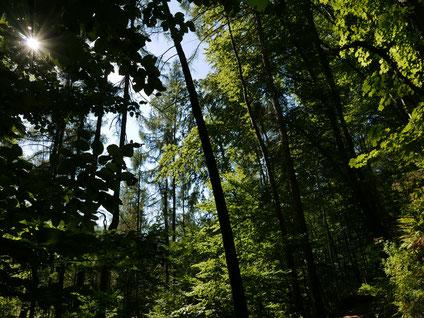Wald Foto: Christiane Scheibler