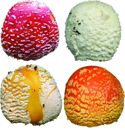 Варианты окраски шляпки: красная, белая, желтая, персиковая.