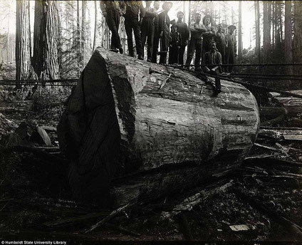 Historische Forstbilder