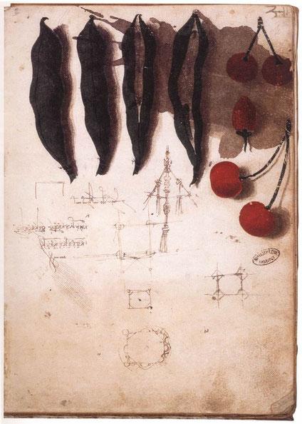 """Léonard de Vinci, """"Fruits, légumes et autre dessins"""", 1487-1489, Institut de France, Paris (source : Web Gallery of Art)"""