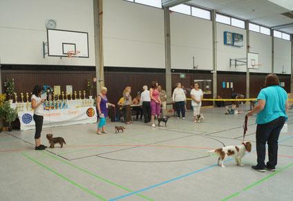 unser Schoko-Yorkshire-Terrier wude sehr gut bei der Rassehundeausstellung in Lauingen beurteilt. Wir freuen uns.