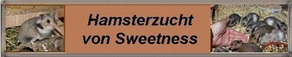 Gold- und Teddyhamsterzucht ,,Sweetness'' von Nicole Könitzer aus Rodenbach/ Hessen